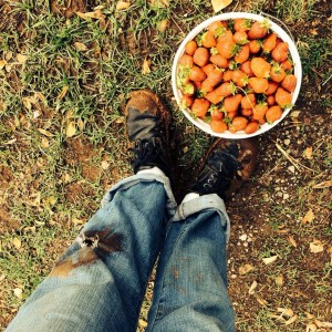 Batey Farms Berry Patch, Murfreesboro, TN, photo by Caryn